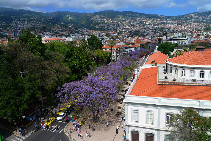Funchal from above