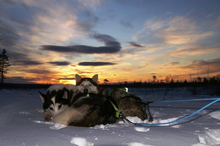 Husky safari Finland