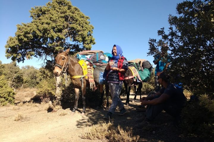 Our mules for the trekking